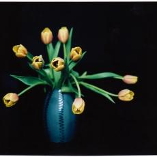 Tulips. LF 4x5, Fuji Instant FP100C